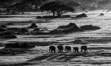 photo dawn-commute.jpg David Yarrow - photographies