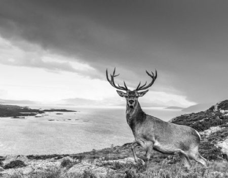 photo deer-yarrow-1.jpg David Yarrow - photographies
