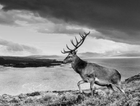 photo deer-yarrow-2.jpg David Yarrow - photographies