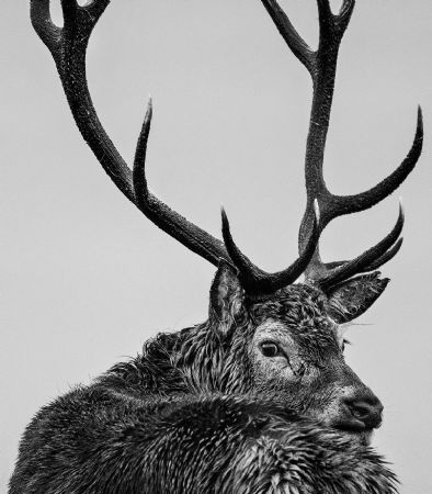 photo deer-yarrow.jpg David Yarrow - photographies
