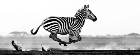 photo desert-flight.jpg David Yarrow - photographies