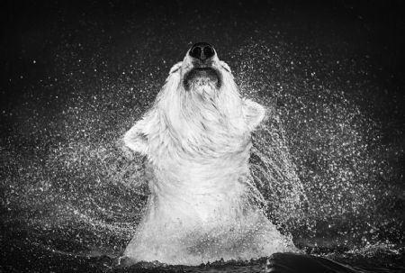 photo diamonds-in-the-sky.jpg David Yarrow - photographies