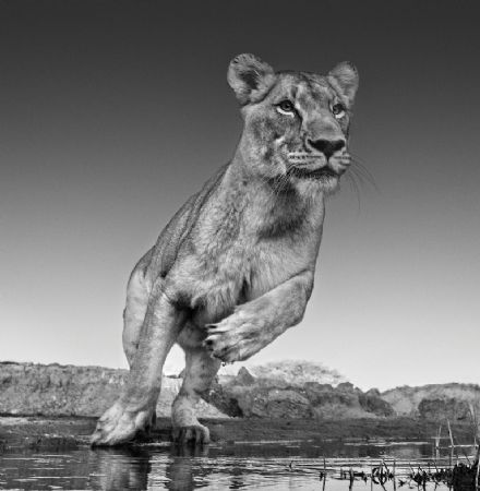 photo emma.jpg David Yarrow - photographies