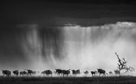 photo exodus.jpg David Yarrow - photographies