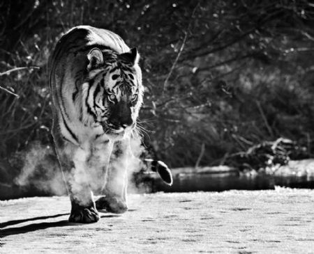 photo eye-of-the-tiger.jpg David Yarrow - photographies