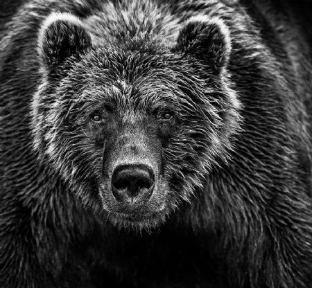 photo face-off.jpg David Yarrow - photographies