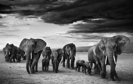 photo family.jpg David Yarrow - photographies