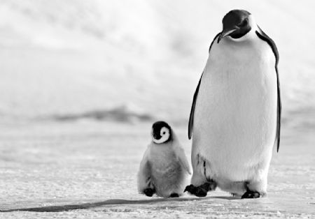 photo father-and-son.jpg David Yarrow - photographies