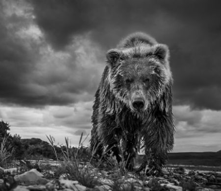 photo funnel-creek.jpg David Yarrow - photographies