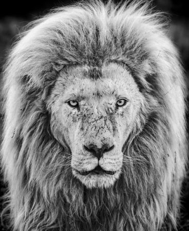 photo gandalf.jpg David Yarrow - photographies