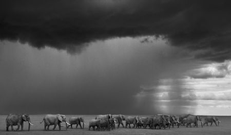 photo gathering-storm.jpg David Yarrow - photographies