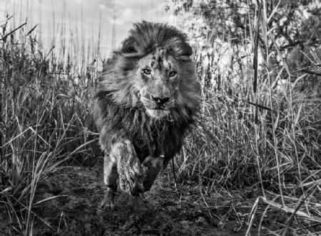 photo gold.jpg David Yarrow - photographies