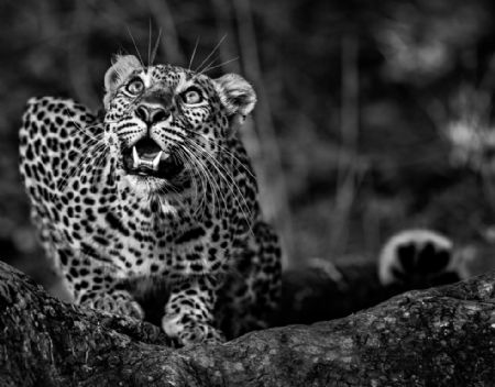 photo ground-alert.jpg David Yarrow - photographies