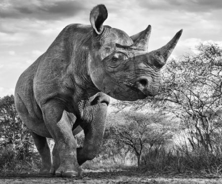 photo image-134---the-departed.jpg David Yarrow - photographies