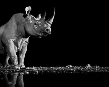 photo image-151---precious.jpg David Yarrow - photographies
