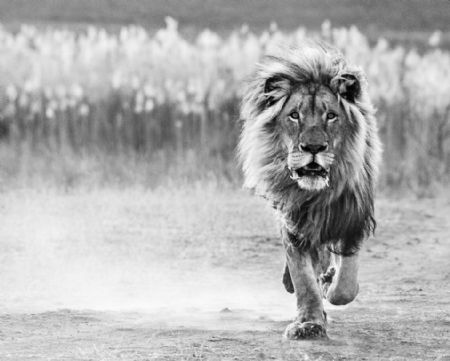 photo image-155---one-foot-on-the-ground.jpg David Yarrow - photographies