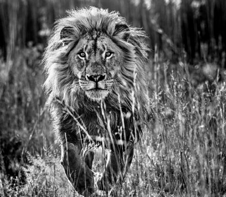 photo image-158---the-full-nine-yards.jpg David Yarrow - photographies