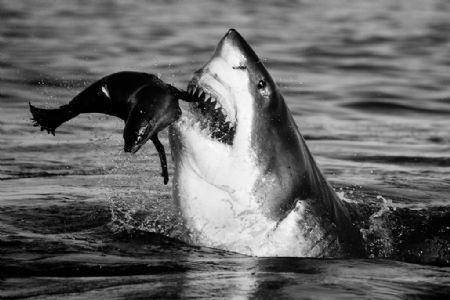 photo image-172---jaws.jpg David Yarrow - photographies