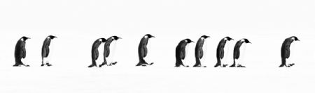 photo image-178---the-long-march.jpg David Yarrow - photographies