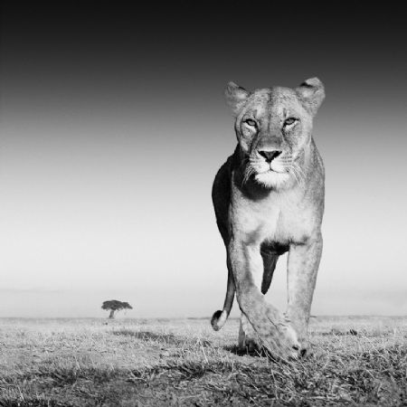photo image-99---the-prize.jpg David Yarrow - photographies