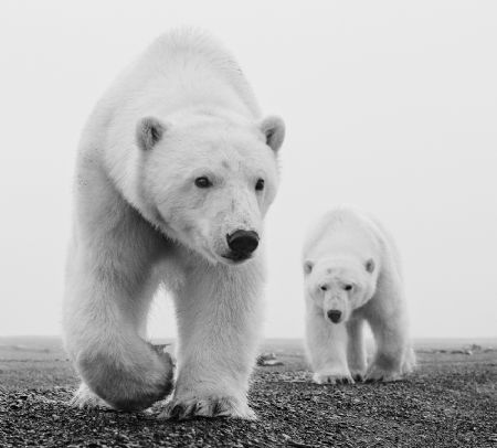 photo kaktovic.jpg David Yarrow - photographies