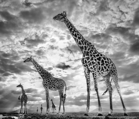 photo keeping-up-with-the-crouchs.jpeg David Yarrow - photographies