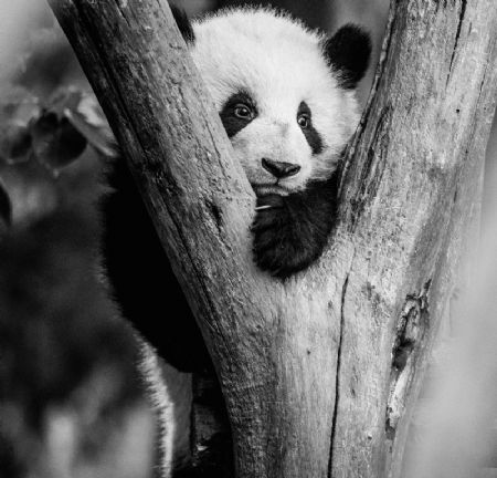 photo kung-fu-panda.jpg David Yarrow - photographies