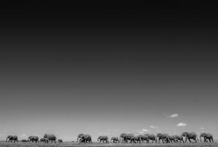 photo life-on-earth.jpg David Yarrow - photographies