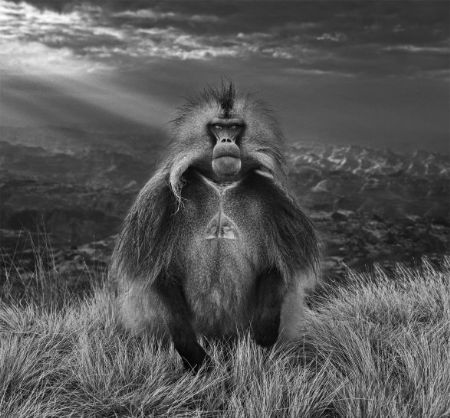 photo members-only-.jpg David Yarrow - photographies