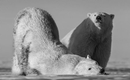 photo monday-morning.jpg David Yarrow - photographies