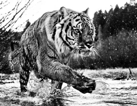 photo mystic-river.jpg David Yarrow - photographies