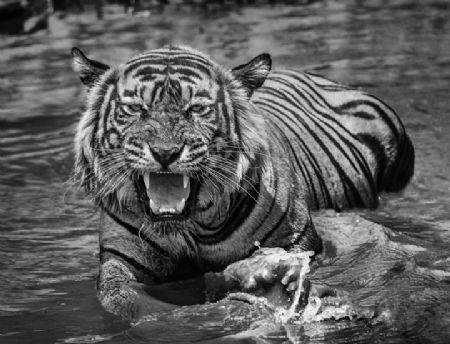 photo risky-business.jpeg David Yarrow - photographies