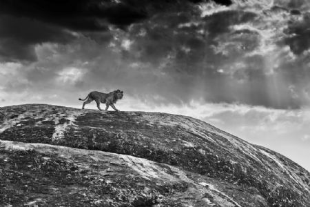 photo rock-star.jpg David Yarrow - photographies