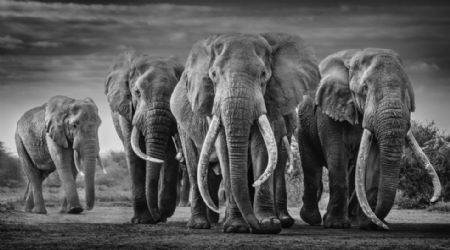 photo squad.jpeg David Yarrow - photographies