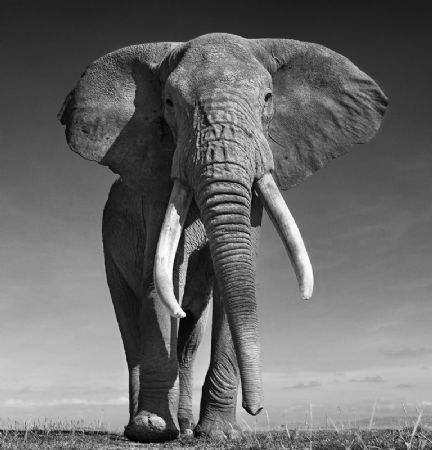 photo the-don.jpg David Yarrow - photographies