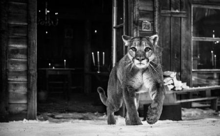 photo the-landlord.jpg David Yarrow - photographies