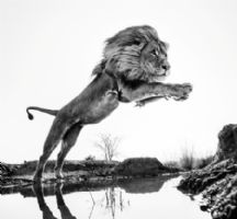 David Yarrow - photographies