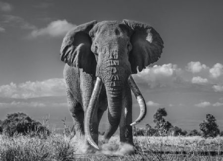 photo tim.jpg David Yarrow - photographies