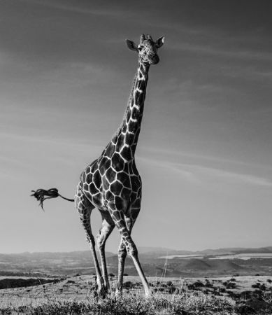 photo tiny-dancer.jpeg David Yarrow - photographies