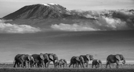 photo walk-the-line.jpeg David Yarrow - photographies