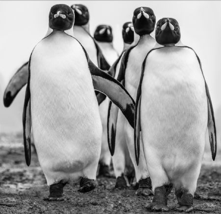 photo wise-guys.jpg David Yarrow - photographies