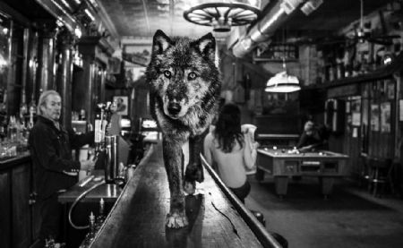 photo wolf-of-mainstreet-ii.jpg David Yarrow - photographies